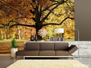 Fototapeta AG Listnatý strom v parku FTNXXL-2427 | 360x270 cm Fototapety skladem
