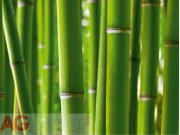 Fototapeta AG Bambus FTS-0170 | 360x254 cm Fototapety skladem