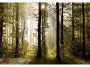 Fototapeta AG Ranní Les FTS-0181 | 360x254 cm Fototapety skladem